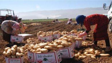 صورة مؤامرة التجّار والسلطة: لا بطاطا لبنانية بعد اليوم..