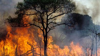 صورة موجة الحر قد تستمر الى 13 ايلول مع خطر اندلاع الحرائق