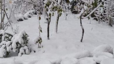 صورة للمرة الأولى هذا العام.. الثلوج غطت مرتفعات الضنية