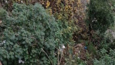صورة في طرابلس.. العثور على جثة شخص مكبّل اليدين داخل بستان