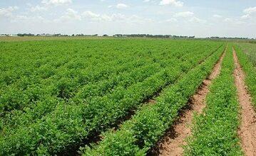 صورة 500 مزارع سيستفيدون من منح مالية بالدولار