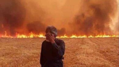صورة غابات القبيات وعندقت وأكروم إحترقت